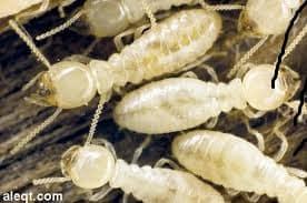 مكافحة النمل الابيض بجازان