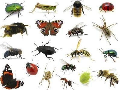 Photo of افضل شركة مكافحة حشرات بحائل 0533472231  بالضمان(خصومات رائعة)