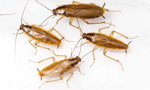 شركة مكافحة حشرات بالرياض 0504402434