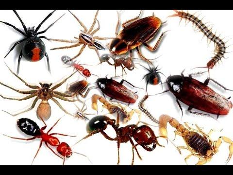Photo of طرق تنظيف المطبخ من الحشرات