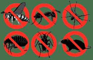 شركة مكافحة حشرات بالمدينةالمنورة