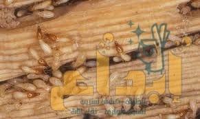 Photo of شركة مكافحة النمل الأبيض بمحايل عسير 0504610845 (خصم40%)