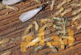 Photo of ارخص شركة مكافحة حشرات بعرعر -( (  متاح للااااايجار 01210373836) خصم 30 % عند اتصالك الآن