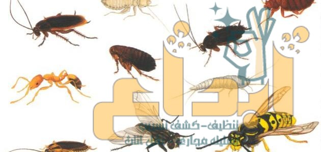 شركة مكافحة الحشرات ببشروره