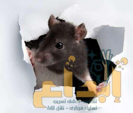 Photo of افضل شركة مكافحة الفئران بابها0504610845  مع الضمان( وبمواد امنه)